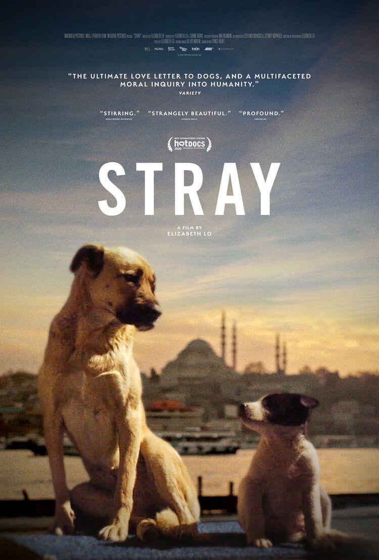 Stray - Elizabeth Lo | Chassé Cinema